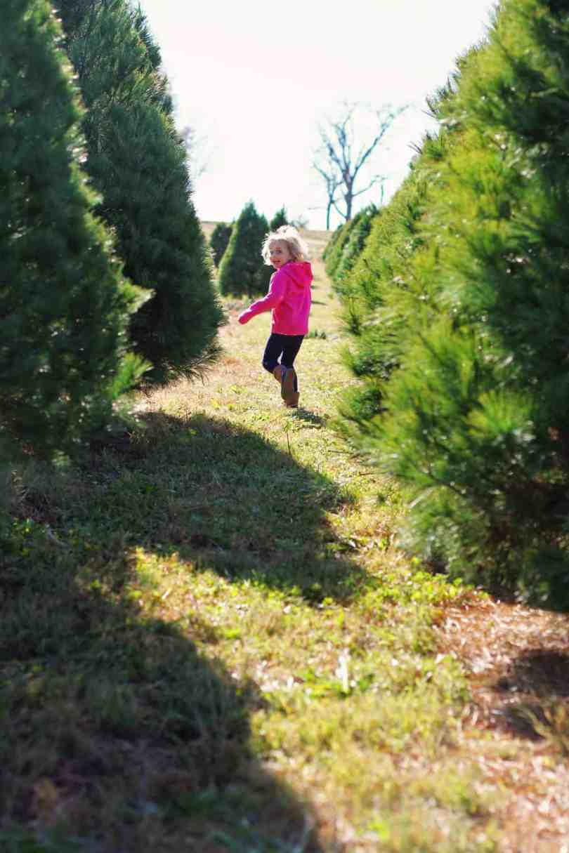 how to choose a christmas tree at a farm with kids