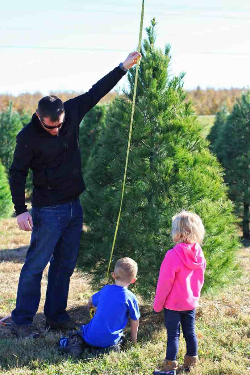 how to choose your own christmas tree to cut down