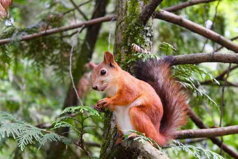 celebrating squirrel appreciation day with kids