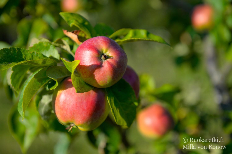 lohjan_omenat