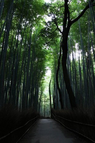 The famous bamboo walk in Kyoto