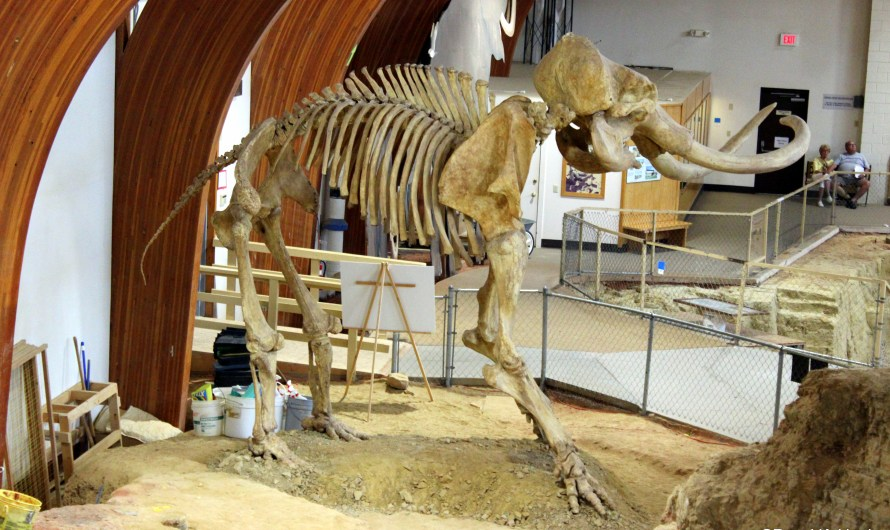 Mammoth Site – nerdiest thing to do on a vacation