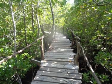The boardwalk through the mangrove forest reaching the ocean - copyright Rupi Mangat