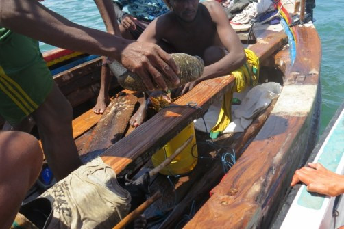 A sea-cucumber - local fishers dive for them and it's a delicacy in some cultures -copyright picture Maya Mangat.