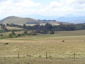 The high altitude farms of Mount Kenya Copyright Rupi Mangat