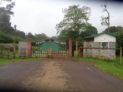 Gate to Castle Forest Lodge Copyright Rupi Mangat