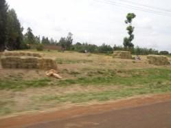 Bales of hay for sale near Mwea Copyright Rupi Mangat