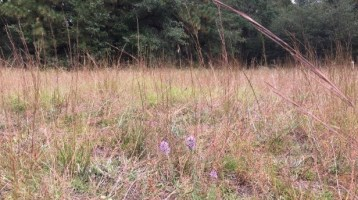 Rural and Critical provides abundant wildlife habitat