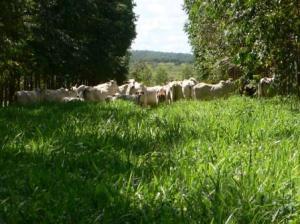 Lavoura Pecuária e Floresta II