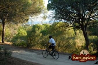 Alquiler bici