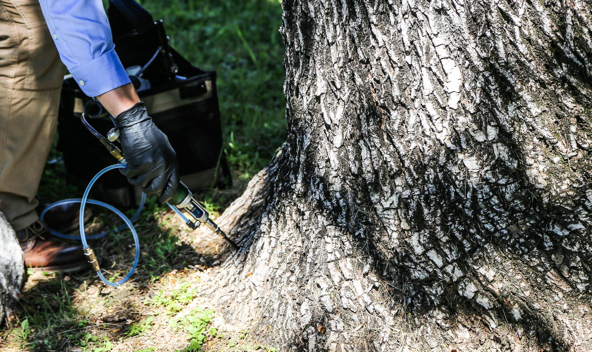 Arborjet – Tree Injection