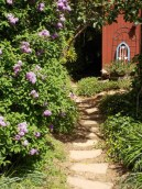 Redwood Valley Garden Path by Clare Vanacore