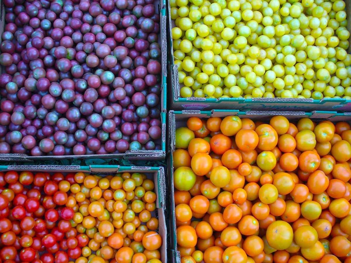 Boxes of rainbow colored tomatoes.