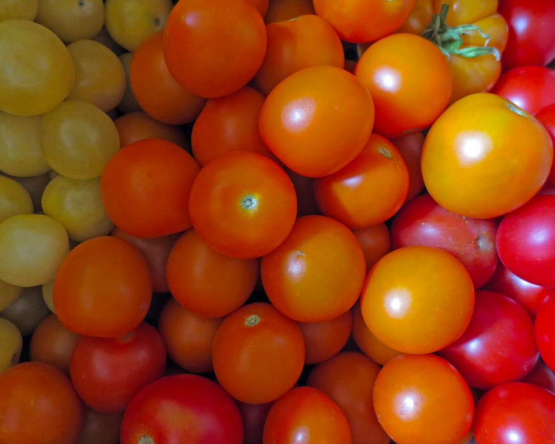 A pile of tomatoes in orange, red and pale yellow.