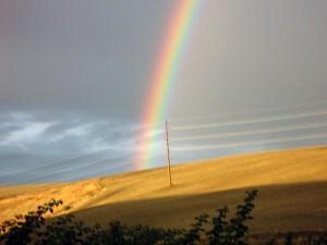 Rainbow over wheat field.