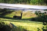 Seeing wildlife in my yard