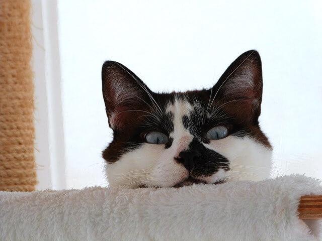 Энтерит у кошек: как лечить болезнь. Как лечить энтерит у кошек