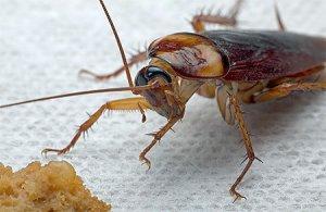 Если в доме завелись тараканы примета