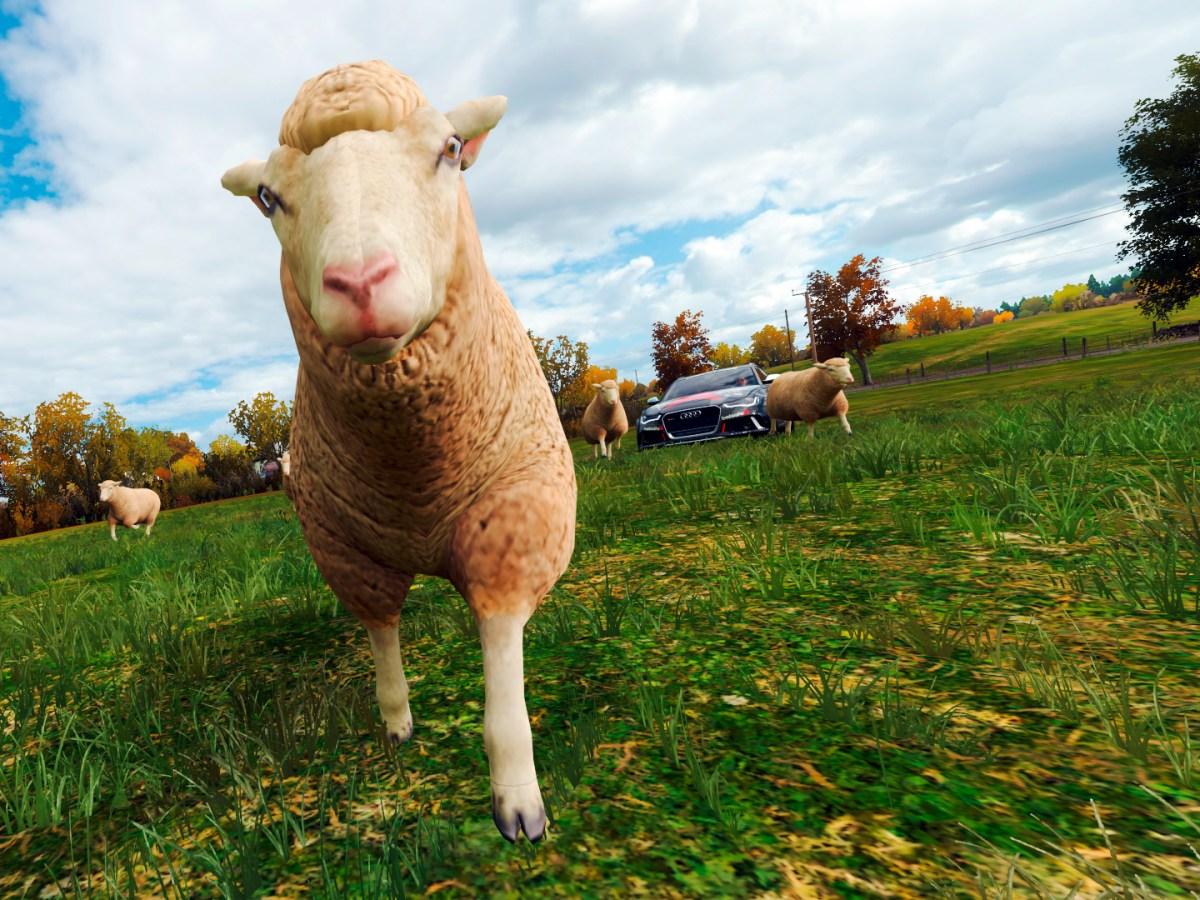 Schafe in Forza Horizon 4