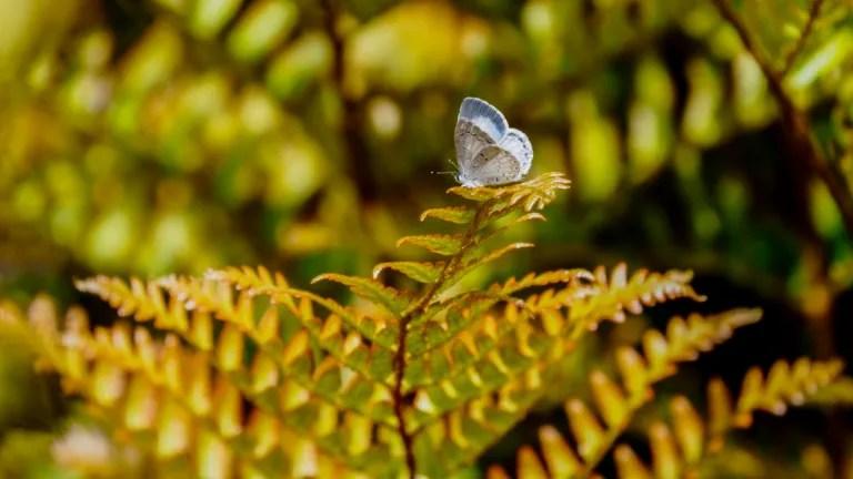 Summer Azure on bright sunlit fern