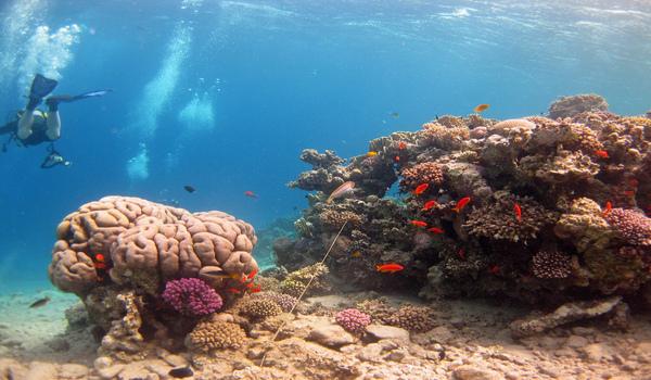 A Scuba Divers Guide to Scuba Diving Dahab