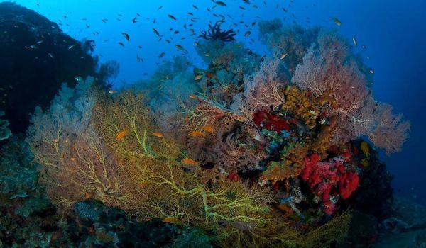 Coral_reef_andaman_island