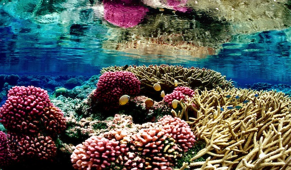 Healthy_coral_reef