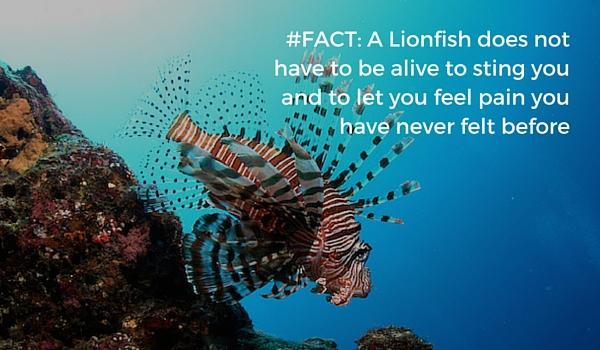 Hunt_lionfish_safe