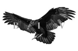 Buried In Verona - Vultures Above, Lions Below Album Review