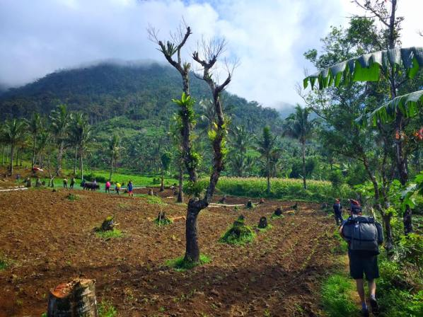 vegetable farm (Photo by: Dim Tesiorna)