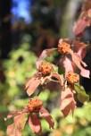 Fall color amid the dogwoods