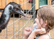 Kaelin Darlings, of Bath, is startled when an Emu from RMT Farms of Litchfield stuck it's head out from the fence at their booth at the Topsham Fair Friday afternoon.