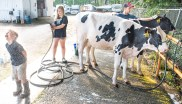 After getting pestered by her brother Will while she was washing her holsteins, Sydney Bullard, 10 of Turner, sprays him as Reeve Twitchell, 12, washes another. Twitchell, the Bullards neighbor, was helping prepare the cows from the Bullard's farm, Brigeen Farms in Turner, for a showing at the Topsham Fair Saturday morning.