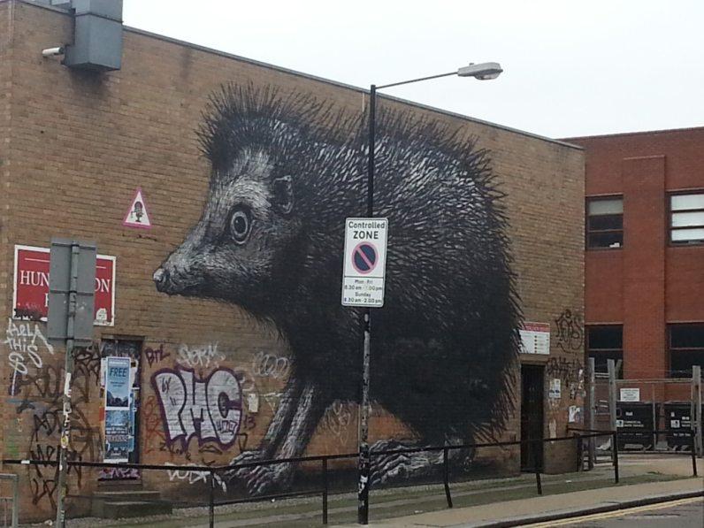 A giant rat