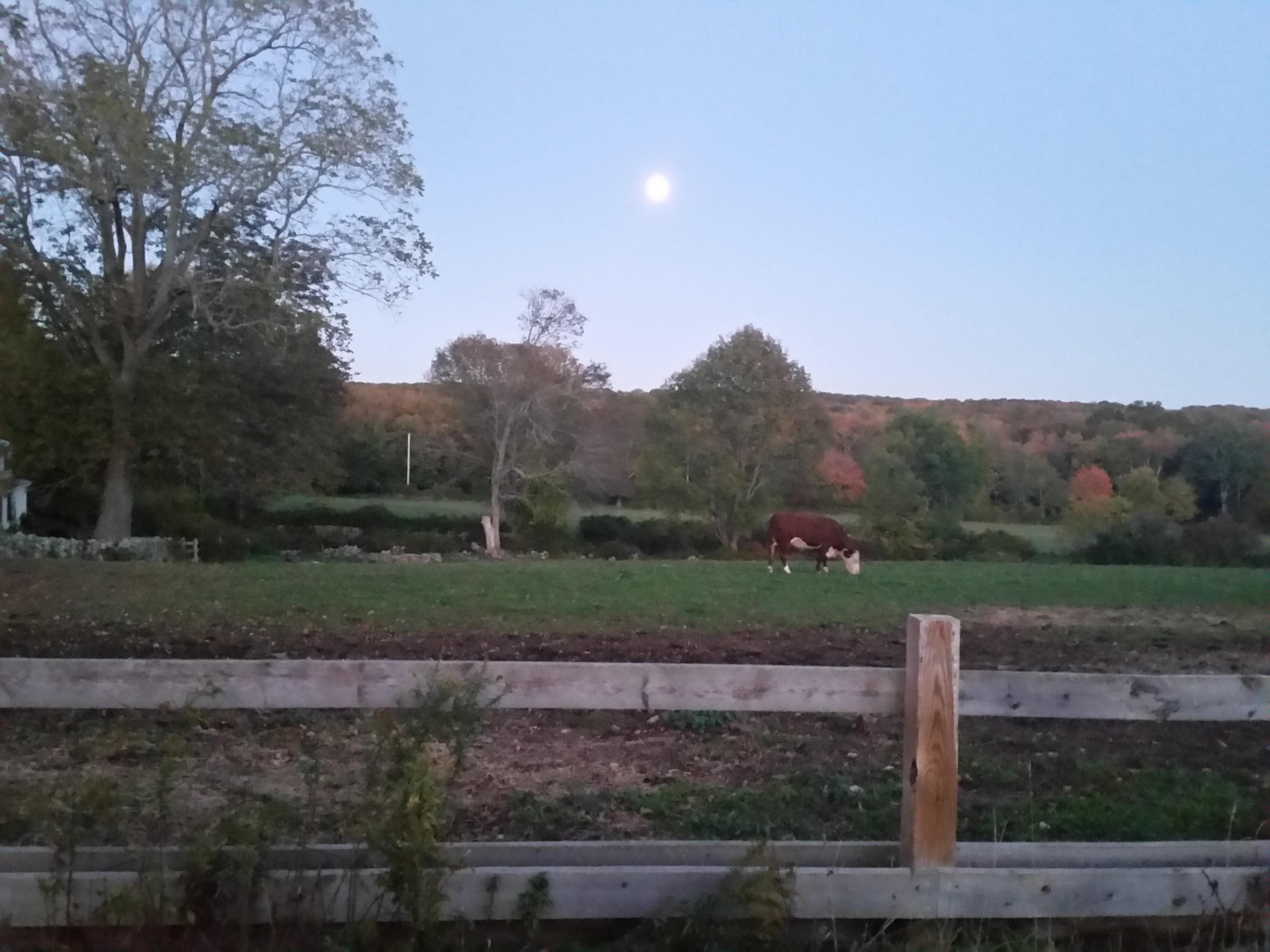 Russet Valley Farm Hopkinton RI
