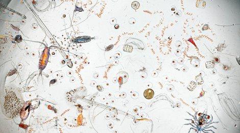 Killing Seas and Trees, Fisheries & Plankton Collapse