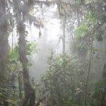 misty_rainforest
