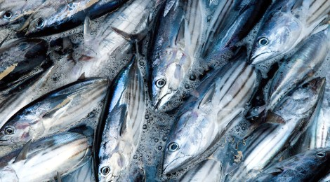Ocean Fish Pasture Restoration To Generate $83 Billion In Fisheries Profits