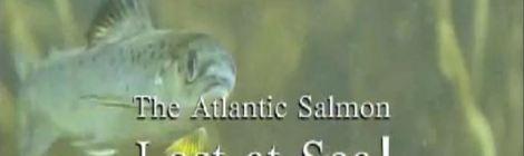 Atlantic Salmon Lost At Sea Film