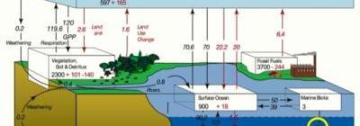 Ocean Pastures Are The Most Important Part Of Global Carbon Cycle