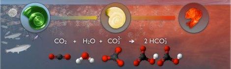 CO2 Forces Ocean Acidification Into High Gear
