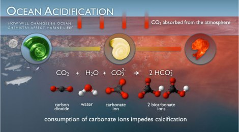 CO2 Forces Ocean Acidification Into High Gear