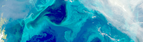 plankton blooms carbon capture