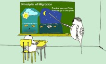 diel migration cartoon