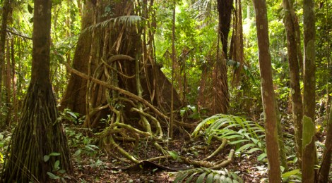 Amazon Rainforest Living Fast Dying Young In High CO2 World
