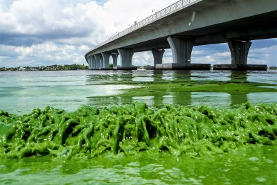Florida's beaches on its east coast are covered with a thick putrifying slime on the 4th of July weekend. - click to read more