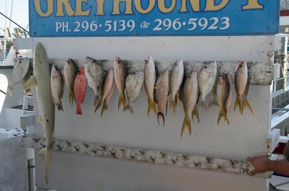 2007 fish shrinking