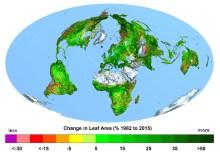 global grass growing