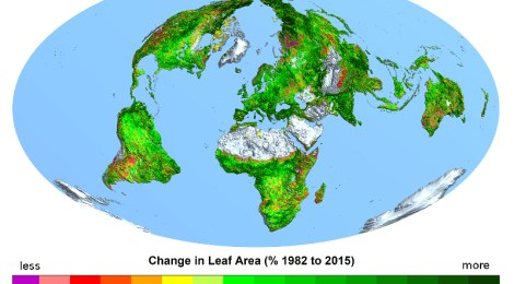 global grass growing