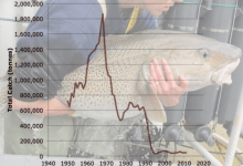 Atlantic_cod_collapse2